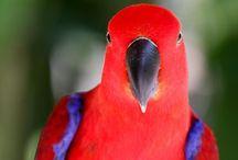 Parrots! / by Kelli Petroski