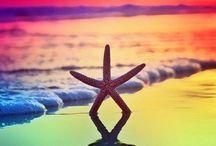 Starfish / Starfish