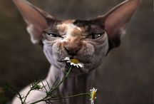 Funny Animals. / Please, funny animal stuff only.
