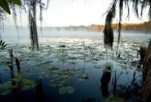 Photography / Photography of Honey Lake Resort's nature & wildlife.