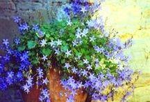 Colores naturales / Disfrutar de los colores que la naturaleza nos brinda...