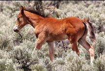 Please-Saving America`s / Canada`s Mustangs! / z.B.;  to save = Mustang Monument-Wild Horse Eco-Resort, = kcarlson@savingamericasmustangs.org =  / by Christiane Abb