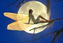 Little fairy / by Halloween on Auburndale st