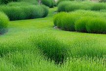 zielone green / garden willow landscape architecture land art sculpture
