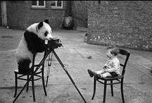 Unpredictable Photographers