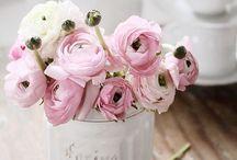 Lovely flowers <3