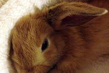 Rabbits/Kaniineja