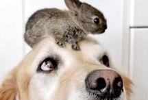 Animals/Eläimet