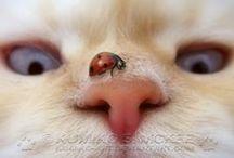 MioMao / Gatti #gattaranell'anima