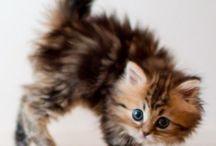 Cats - DIY And More / Katzen und Katzenbabys