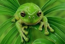 Green / The freshness of Green