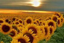 Yellow / The joy of Yellow