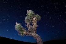 Desert Life / by Pam Ell