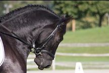 Equus / All things horse