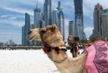 #PinguInDubai / Whazzup Dubai? :)