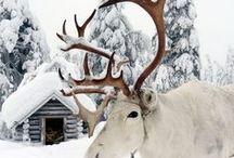 VOYAGE | Finlande / Road trip en Finlande. Que voir en Finlande ? Où manger en Finlande ? Quel budget pour voyager en Finlande ? À quelle période y aller ? Découvrir la Laponie à Noël.