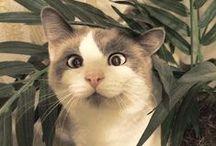 koty ewriłer / kotyyyy! CATS! <3