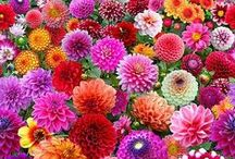 The Language of Flowers / Flowers