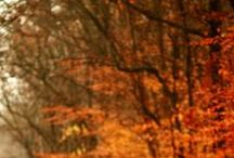 All Things Autumn / From leaves to pumpkins and Halloween... we love Autumn