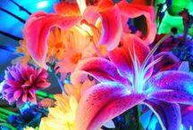 Shot of Colour / alicetawhai@yahoo.co.nz