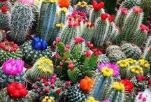 Cactus & Co / Cactuses and succulent plants