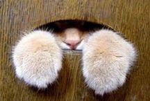 purrfect kitty cats ~ dierbare katjies