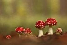 mushroomy