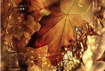 everything autumny