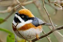 Beautiful Birds! / by Deb Harmon