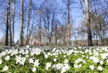 Flowers / Blommor / by Hildas