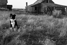 Barns! / by Deb Harmon