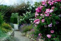 Garden Walls / by K Clausen