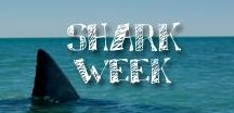 Moore: Shark Week / Celebrate your favorite week of the year with some fin-tastic shark crafts! _____/)_____\o/___