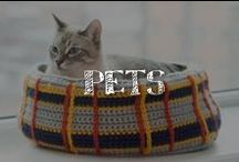 Moore: Pets / Pet costumes, pet crafts, anything you can imagine to create for your pets! Dogs, cats, rabbits, ferrets, sugar gliders, hamsters, birds, rats, and everything in between! Cute and fun ideas for your pets! / by A.C. Moore Arts & Crafts
