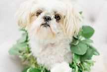 Pets at Weddings / Couples and their pets, how to include them in your big day