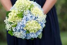 wedding / by Andrea McHugh