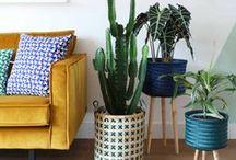 vtwonen ❥ BOTANISCH / Marij Hessel heeft naast haar liefde voor vintage, DIY's & keramiek ook een enorme voorliefde voor groen. Haar verzameling kamerplanten groeit gestaag want zij kan geen tuincentrum verlaten zonder een nieuwe plant onder haar arm. Op vtwonen.nl/myattic én op dit Pinterest-board laat Marij zien welke kanten je allemaal op kunt met groen in huis.