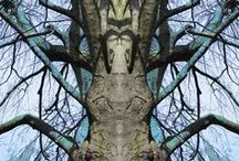 My Photos (Tree-Totems) / ...every picture I see can turn into a door that invites me in to come home... ( photos taken by me from trees and then manipulated in Photoshop)