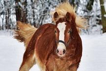 Animais: Equinos