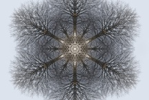 My Mandalas (Tree-Mandalas) / ...every picture I see can turn into a door that invites me in... to come home... ( photos taken by me from trees and then manipulated in Photoshop)