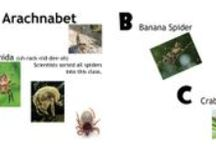Arachnabet (book) / Picture Book (ages: 8 and under)  Come spin through the alphabet and discover different spiders and some of their common traits.  AVAILABLE AT: www.guardianangelpublishing.com    Also including crafts and activities that will go along with the book.