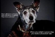 Senior Pets / Senior pets have lots of love to give!!