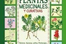 HIERBAS  MEDICINALES / by Xinia Maria Barboza Lepiz