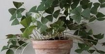 House Plants / Fun tips and tricks to improve the home you love to live in.