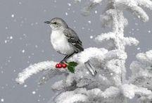 Holiday Greetings & Prints