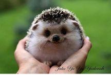 Hedgehogs Make Me Smile