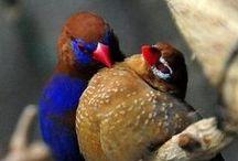 Kuşlar / Doğa ve Kuşlar