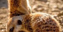 Anne ile  Sevimli Yavrular / (Hayvanlar alemi)