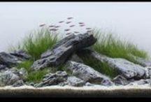 Aquariums&fishes