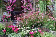 Garden/minigarden/Japanese Garden / Idee per un giardino speciale